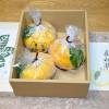 京都の老舗和菓子店の高級夏みかん寒天「夏柑糖」を買ってみた!